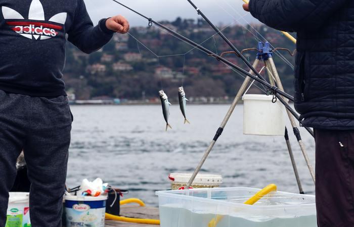 cañas de pescar para el mar